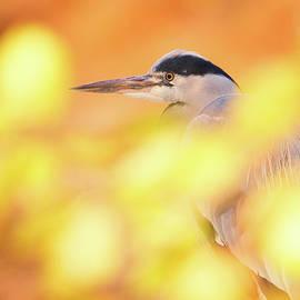 Roeselien Raimond - Hidden Heron