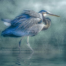 Brian Tarr - Heron