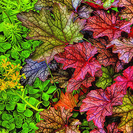 Dennis Lundell - Heuchera and Sedum