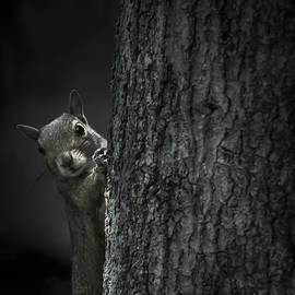 Debra Forand - Hi Squirrel