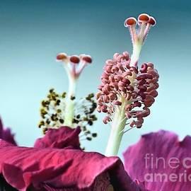 Janice Drew - Hibiscus Flower