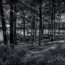 Mike Deutsch - Hidden In The Trees