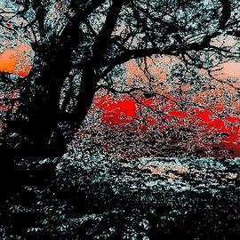Romuald  Henry Wasielewski - Hidden Sunset