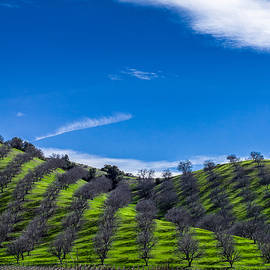 David Smith - Hidden Valley Hills