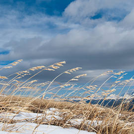 Cascade Colors - High Altitude Winter Grass Panorama