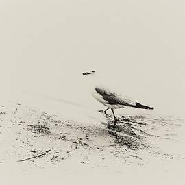 AL Thomas - High Key Seagull