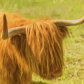 Veikko Suikkanen - Highland Cow