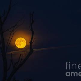 Thomas R Fletcher - Highland Moon