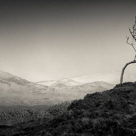 Dave Bowman - Highland Tree