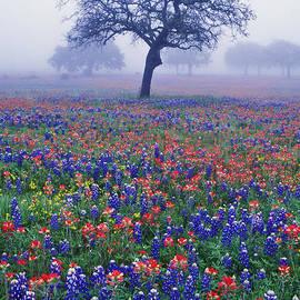 Daniel Dempster - Hill Country Mist - FS000062