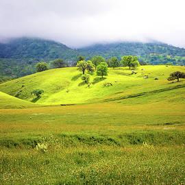 Lynn Bauer - Hills of Gold