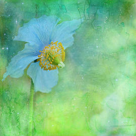 Margaret Goodwin - Himalayan Blue Poppy Dreams