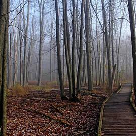 Debbie Oppermann - Hint Of Fog In Fall