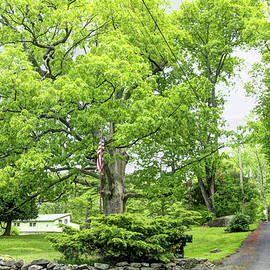 Mother Nature - Historical Pin Oak Tree - George Washington could have leaned on this tree