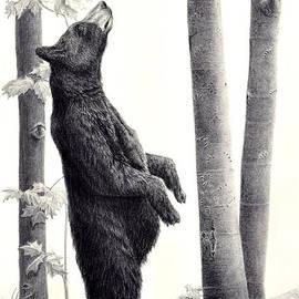 Susan Fraser SCA  B Sc - Hmmm...Black Bear in the Beechnut Grove