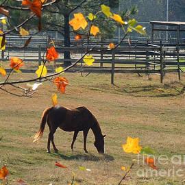 Nava  Thompson - Home On The Farm