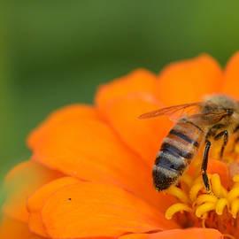 Ssb Creations - Honey Bee