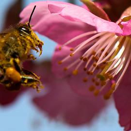 Peteris Vaivars - Honeybee