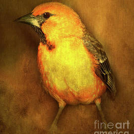Kathy Franklin - Hooded Oriole
