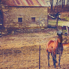 Anna Louise - Horse and Old Stone Barn