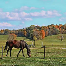 Allen Beatty - Horse Country