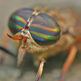 Dorothy  Pugh - Horse Fly