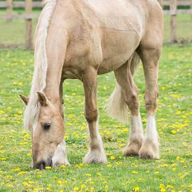 Marcin Rogozinski - Horse Grazing 1