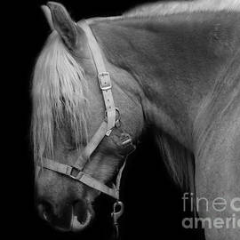 Mim White - Horse in Black and White