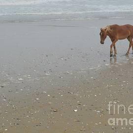 Lynn R Morris - Horse on Corolla