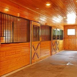 Linda Covino - Horse penthouse
