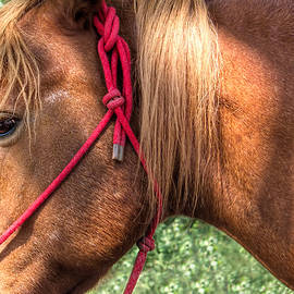Carol  Lux Photography - Horse Portrait