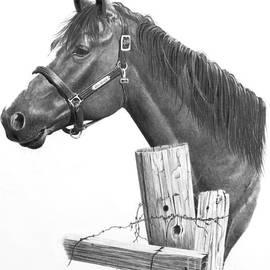 Stephen McCall - Horse Portrait