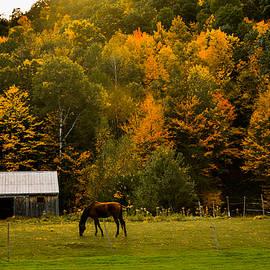Jeff Folger - Horse under Golden  fall foliage