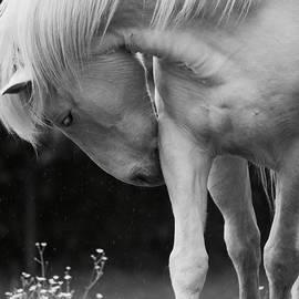 Rachel Morrison - Horse with Flowers