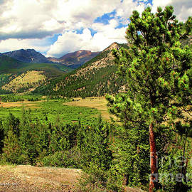 Joan Minchak - Horseshoe Park, Rocky Mountain, Colorado