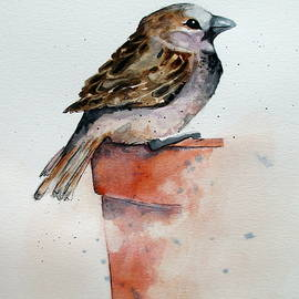 April McCarthy-Braca - House Sparrow