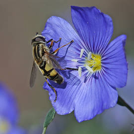 Gary Wing - Hoverfly