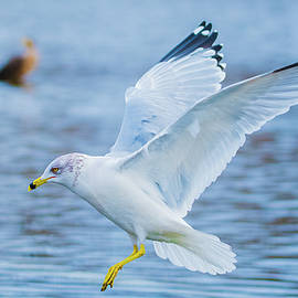 Jeff at JSJ Photography - Hovering Seagull