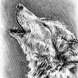 Andrew Read - Howling Wolf