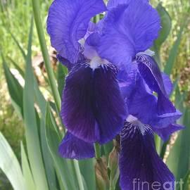 Marsha Heiken - Hugging Irises
