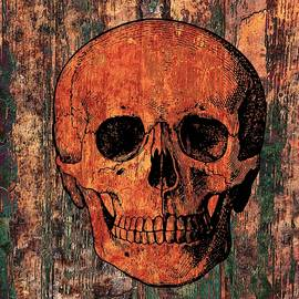 Ally  White - Human Skull