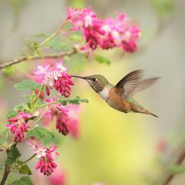Angie Vogel - Hummingbird Heaven 2