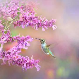 Lynn Bauer - Hummingbird in Shades of Lavender