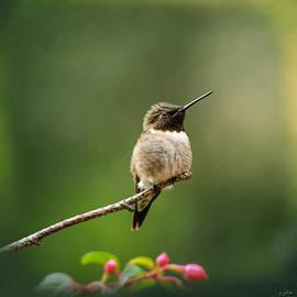 Jai Johnson - Hummingbird In The Garden