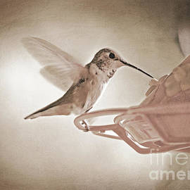 Tina Wentworth - Hummingbird