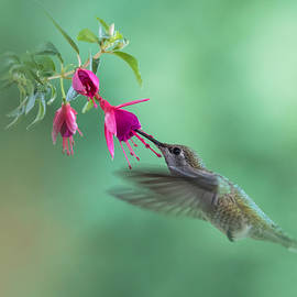 Angie Vogel - Hummingbird Tranquility