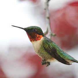 Hummingbird Watch Tower