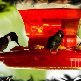 Larry Weingartner - Hummingbirds Feeding Framed