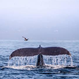 Janis Knight - Humpback Whale Flukes
