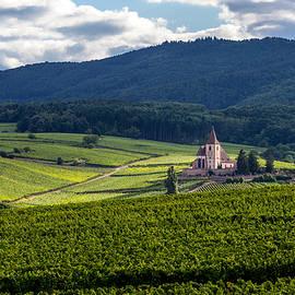W Chris Fooshee - Hunawihr in the vineyards